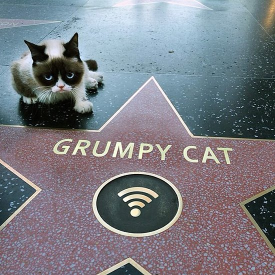 Grumpy Cat, GIFs, and Gadgets: The Year in Google Search