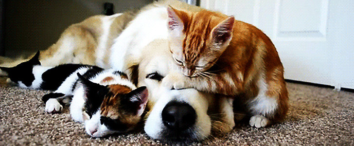 9 Cute Dog and Cat GIFs That Will Make Your Day