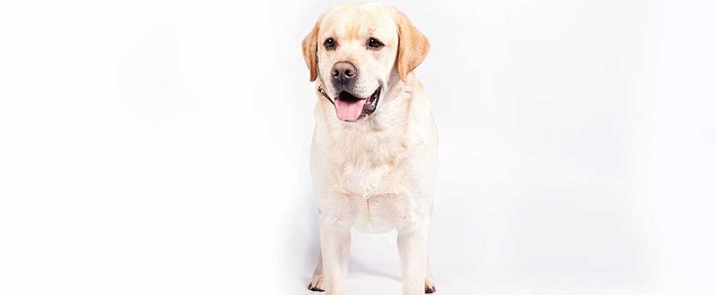 Woof, Woof! The Top 10 Dog Breeds of 2013