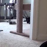 Attack Cat I Video