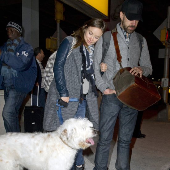 Olivia Wilde and Jason Sudeikis With Their Dog in NYC