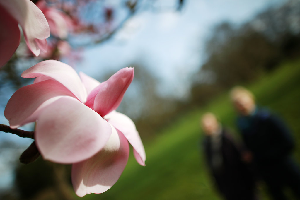 Magnolia trees bloomed in London's Royal Botanical Gardens.