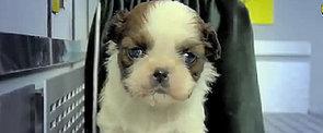 Fuzzy, Fuzzy, Cute, Cute