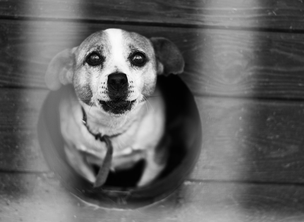 Myth: Shelter Dogs Have Irreparable Bonding and Socializing Issues.