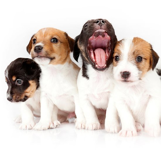 Puppy Breed Quiz