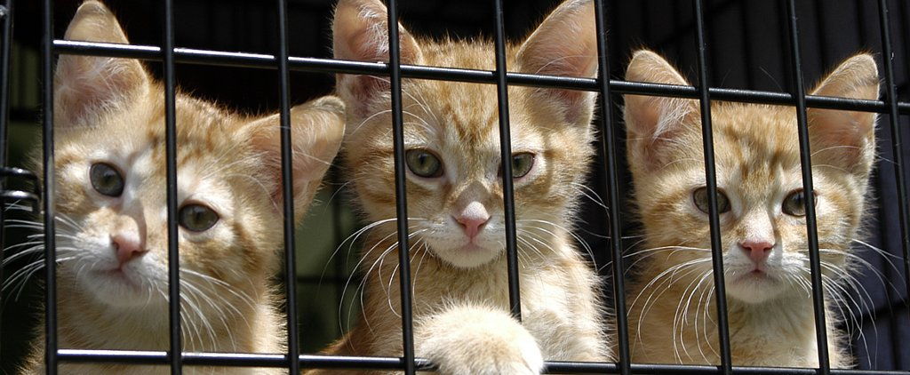 To the Rescue: Choosing a Shelter Cat