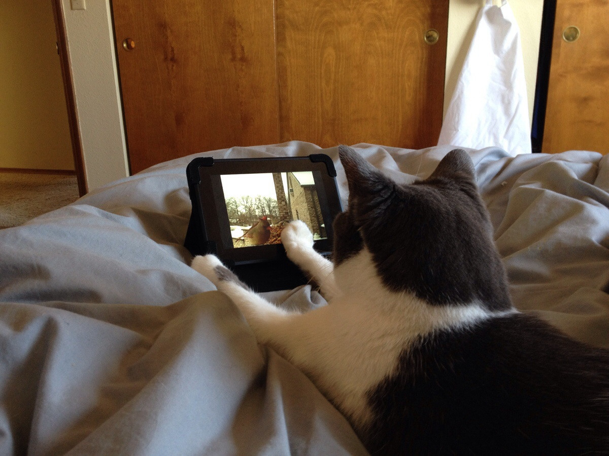 """""""Before my mom leaves the house, she sets up the kindle so the cat can watch bird videos in bed."""" Source: Reddit user tribearatops via Imgur"""