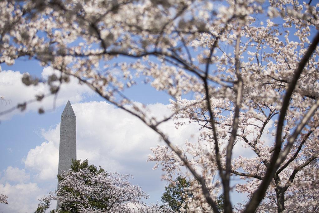 Washington Dc Cherry Blossoms Popsugar Celebrity