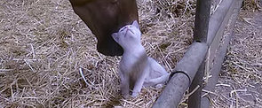 Cuteness Overload! Here's a Horse Petting a Kitten