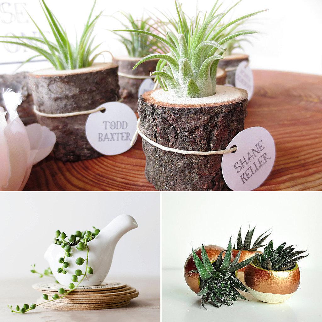 Cute office plants popsugar smart living for Indoor plant gift ideas