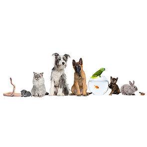 Pet Personality Quiz