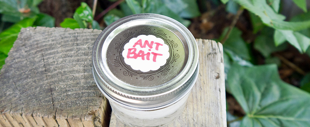Keep Ants Away With This Easy DIY