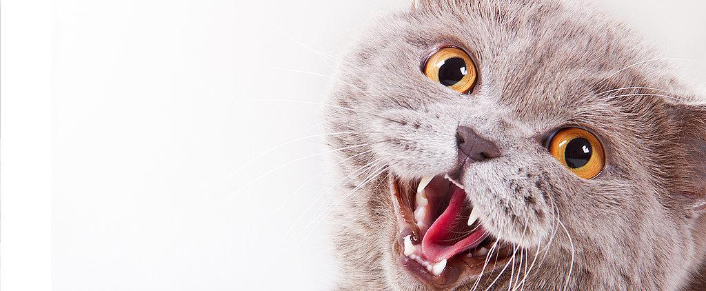 Pet Peeves: My Cat Won't Stop Meowing!