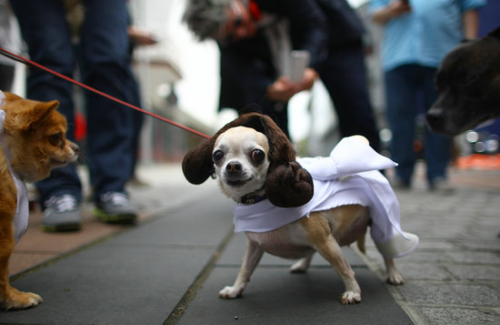 Costume Ideas For the Coolest Dogs Only