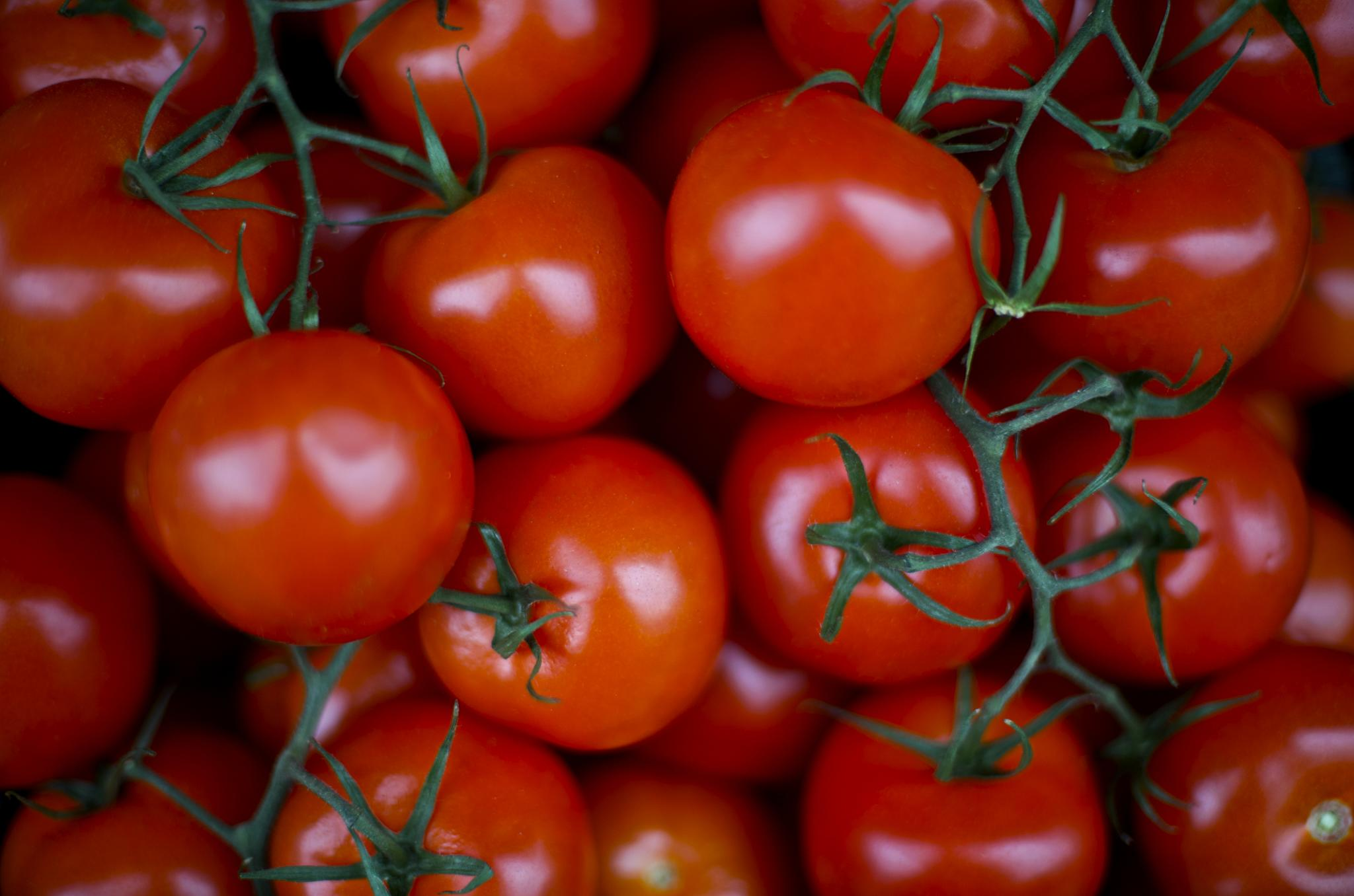 What to Buy: Early Girl Tomatoes