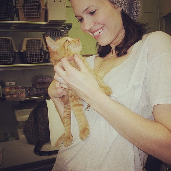 Mandy Moore's Cats