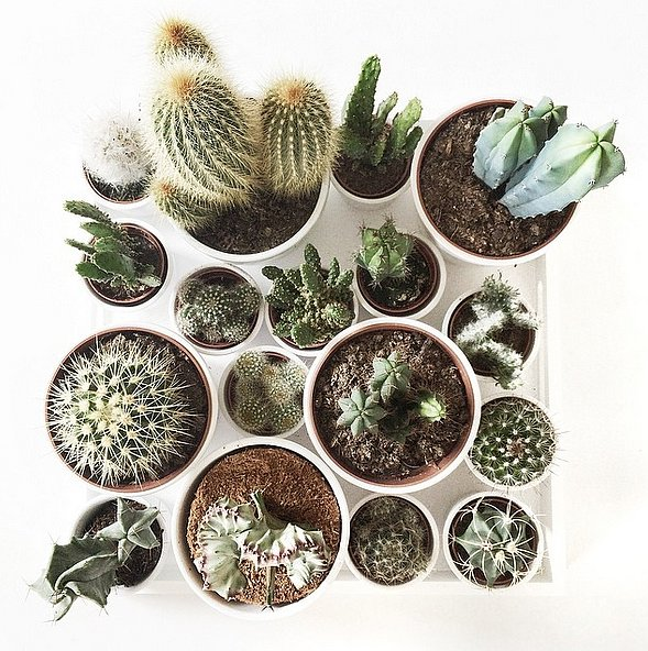 Create a standout coffee table by using a collection of matching items. Whether it's cacti or candles, grouping items creates a surprising table assortment.  Source: Instagram user everythingelze