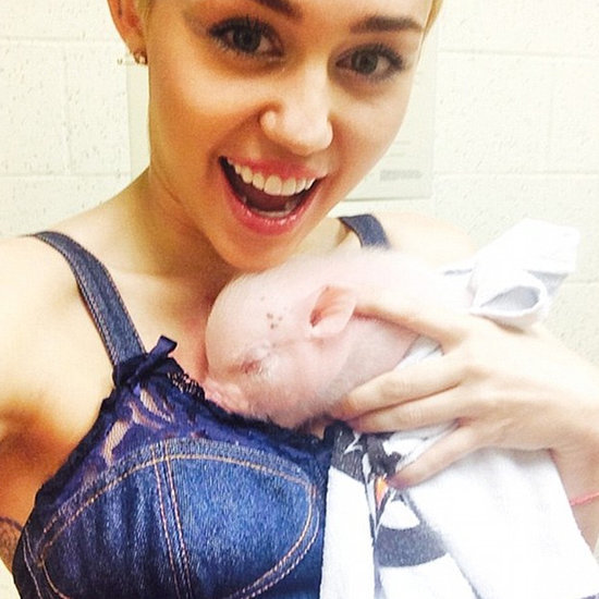 Miley Cyrus's Pet Pig | Video