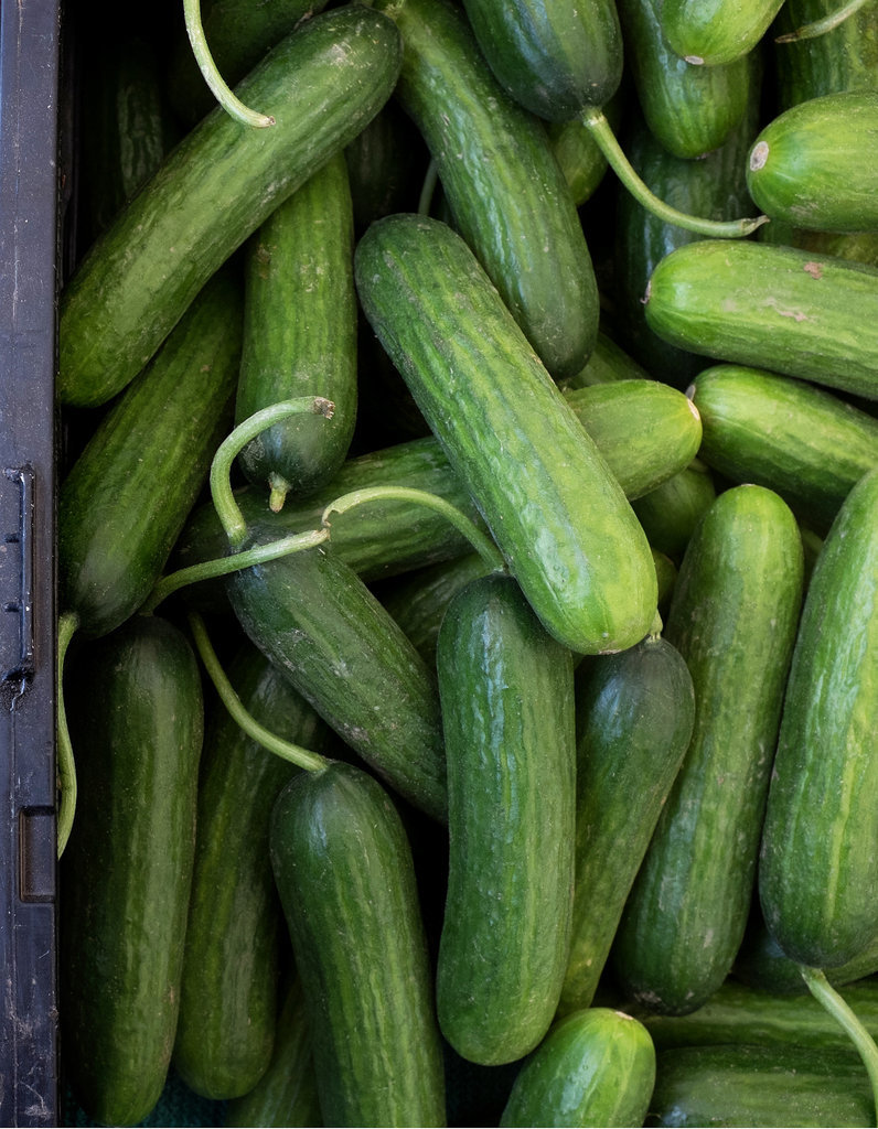 The Fall Food: Cucumbers