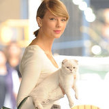 Taylor Swift's Cats