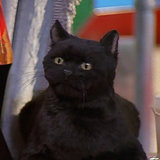 39 Salem Saberhagen Quotes You Should Start Using Immediately