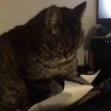 Cat Flicking Paper | Video