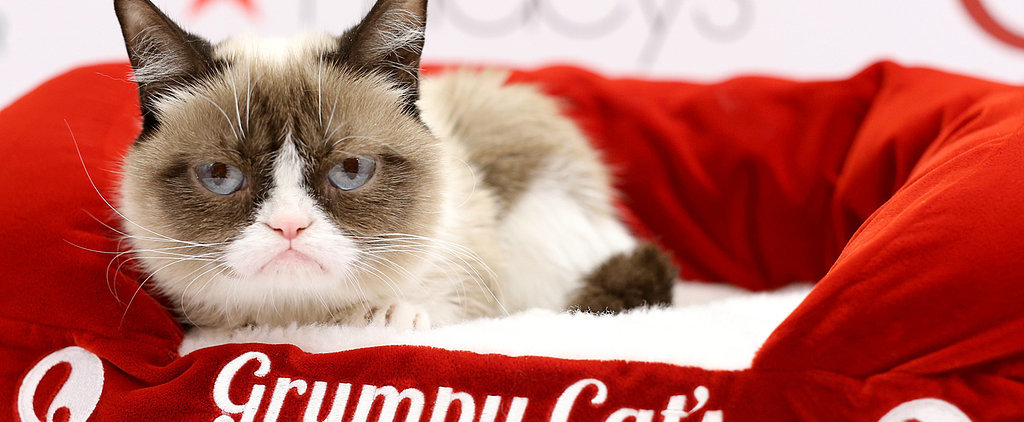 Peek Into Grumpy Cat's Worst Christmas Ever