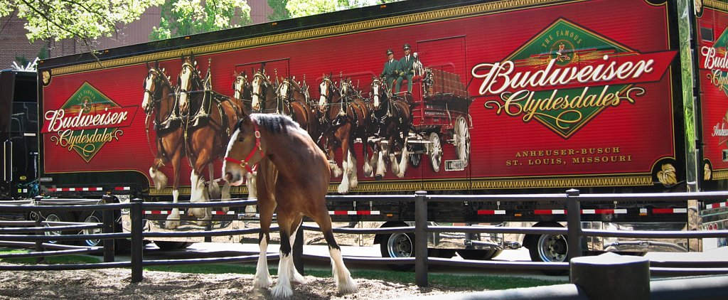 Say Goodbye to Budweiser's Cute Clydesdale-and-Puppy Commercials