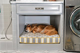 Room of the Day: Laundry Room Goes to the Dogs (5 photos)