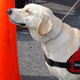 Massachusetts School Denies Boy His Service Dog