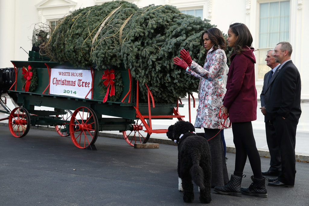 First Lady Michelle Obama received the official White House Christmas tree alongside her daughters and their dogs in November.