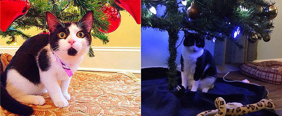 The Best Furry Presents Underneath the Christmas Tree