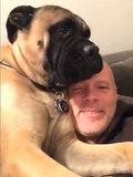 Norman the Bullmastiff Really Hates His Owner's Singing