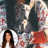 PHOTO: Meet Kylie Jenner's Precious New Puppy