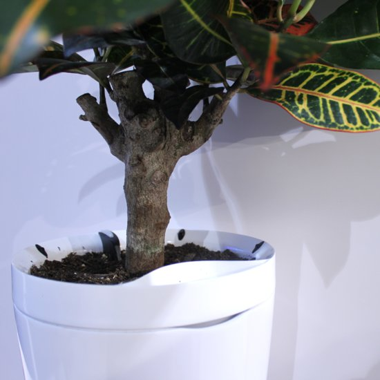 Pot That Waters Your Plants
