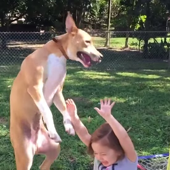 Watch This Dog's Face Go From Happy to Guilty as It Falls on a Kid