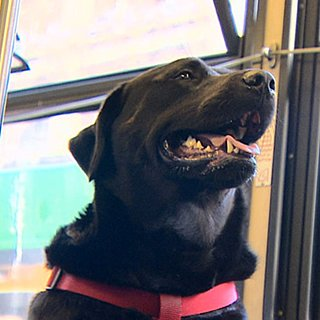 Dog Takes the Bus to the Dog Park All by Herself