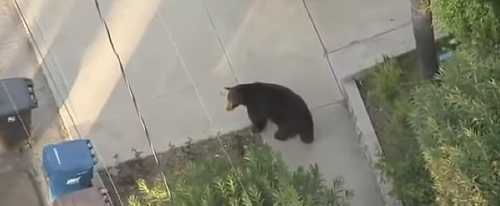This Guy Walked Into a Bear Because He Was Texting