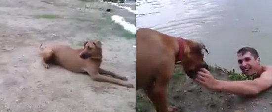 This Dog Thinks His Owner Is Drowning, Jumps In to Save Him