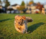 5 Worrisome Dog Breeds