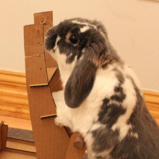 Bunny Pushing a Beer Cart
