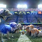 On Super Bowl Sunday, It's  Dogs Vs. Cats for a Super Cause