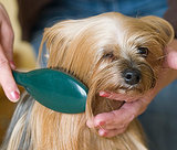 Long-Haired Dog Brushing Tips