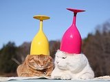 Watch This Very Important Footage Of Cats With Wine Glasses On Their Heads