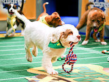 As If We Needed 7 Reasons to Watch the Puppy Bowl