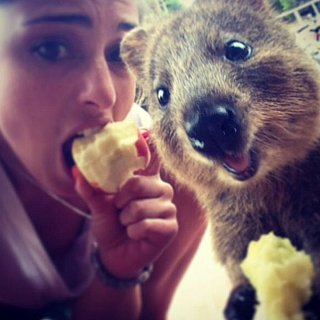 Quokka Selfies