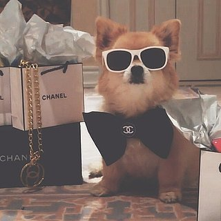 Richest Dogs on Instagram
