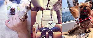 Lifestyles of the Rich and the Famous Are Nothing Compared to These Pups