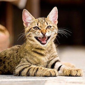 10 Sounds That Cats Make -- and What They Mean