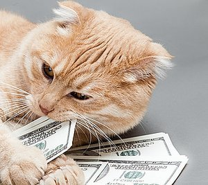 Ways My Cats Save Me Money